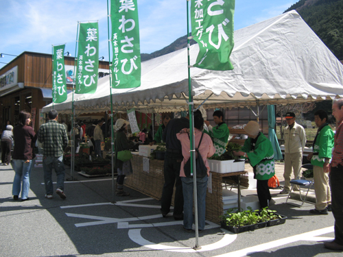 葉わさび山菜まつり 道の駅みなみ波賀