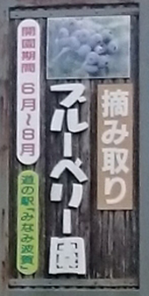 ブルーベリー狩り 7月20日から始めます 兵庫 道の駅みなみ波賀