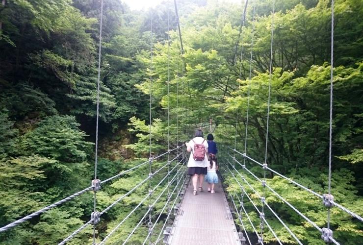 緑のトンネル空中散歩500