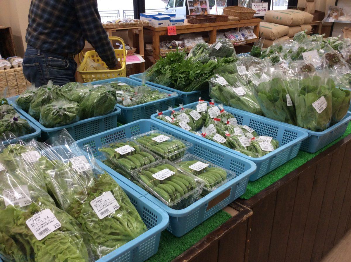 ふき、わらび、入荷しています❗️  道の駅みなみ波賀野菜直売所